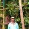 ►तुळस येथे १० फुट उंचीचे मिरची झाड