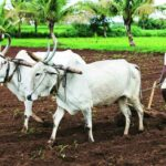शेतक-यांचा लढा