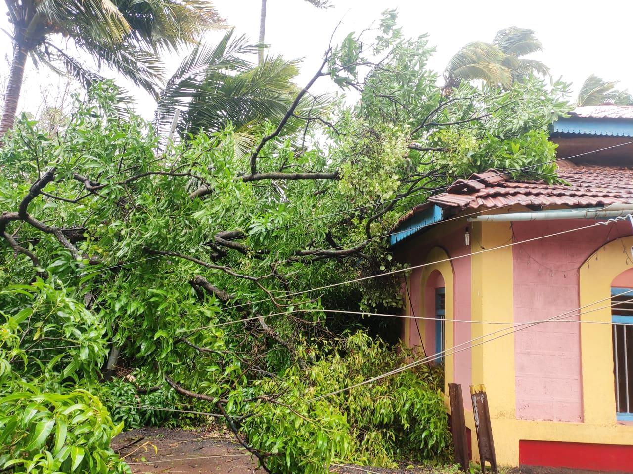 वादळी वा-याने नागरिकांमध्ये भितीचे वातावरण : झाडे पडून नुकसान